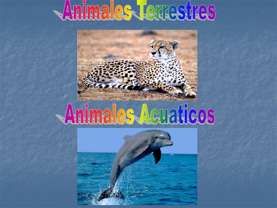 Son los animales que caminan o corren apoyando las patas en el suelo, como el leopardo o la lagartija.