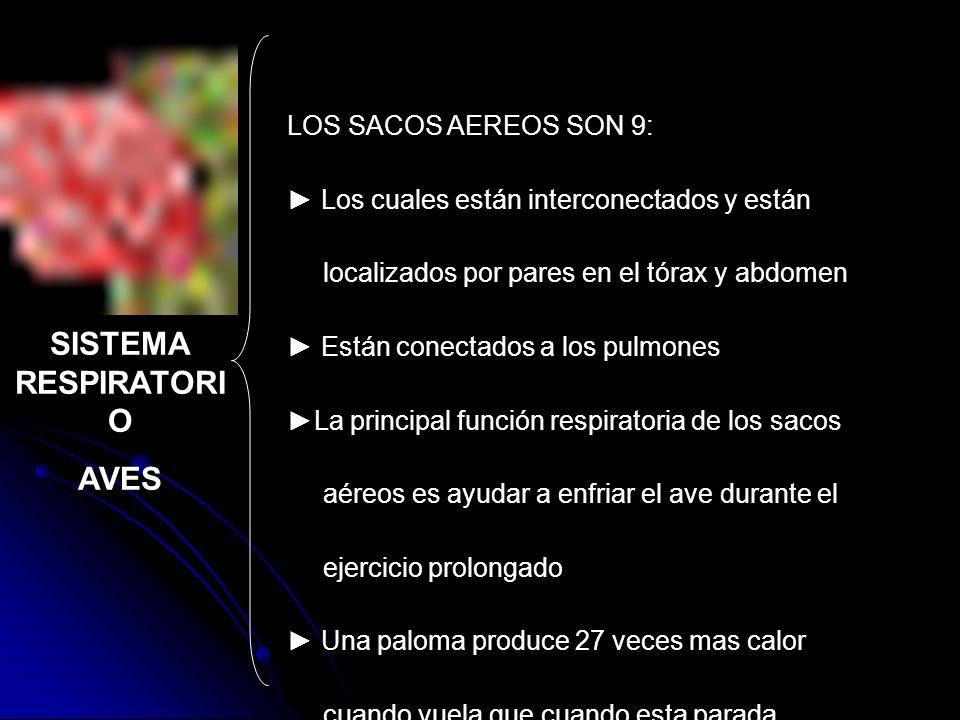 LOS SACOS AEREOS SON 9: Los cuales están interconectados y están localizados por pares en el tórax y abdomen Están conectados a los pulmones La princi
