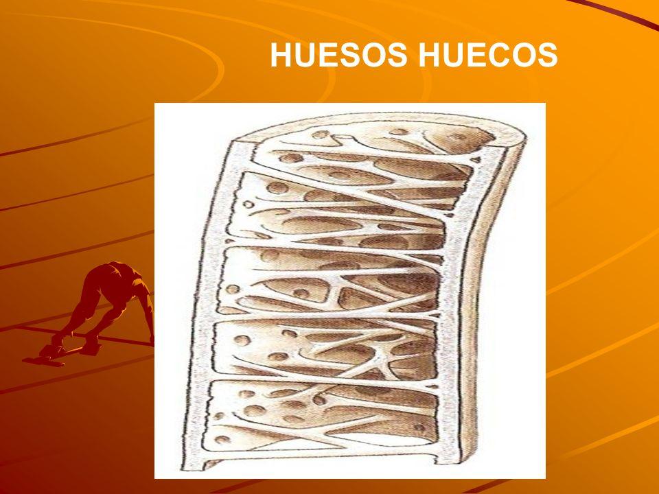 HUESOS HUECOS
