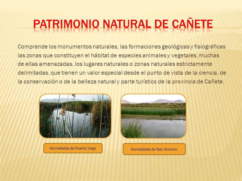 Comprende los monumentos naturales, las formaciones geológicas y fisiográficas las zonas que constituyen el hábitat de especies animales y vegetales,