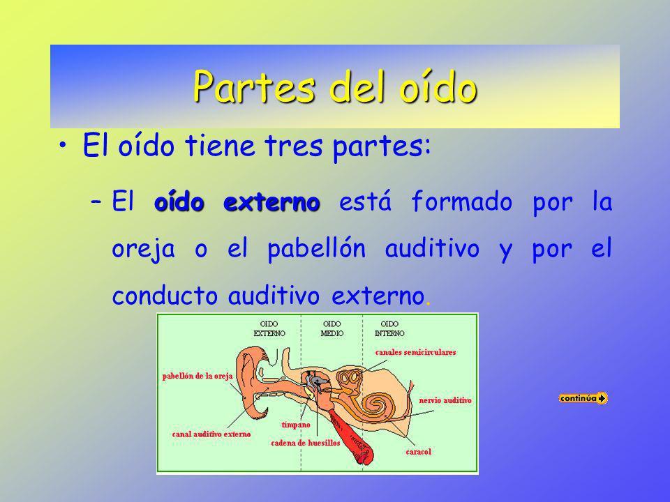 oídos.Los órganos de la audición son los oídos. Los oídos están situados a ambos lados de la cabeza. oreja.La mayor parte del oído está protegido por