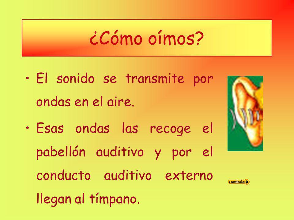 oído medio –El oído medio está separado del oído externo por una membrana llamado tímpano. En el oído medio está la cadena de huesecillos. oído intern