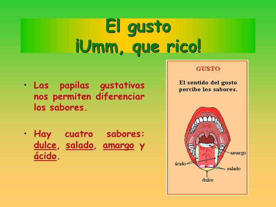 El gusto ¡Umm, que rico! lenguaLa lengua es el órgano del sentido del gusto. Notamos el sabor de los alimentos cuando tocan la lengua. papilas gustati