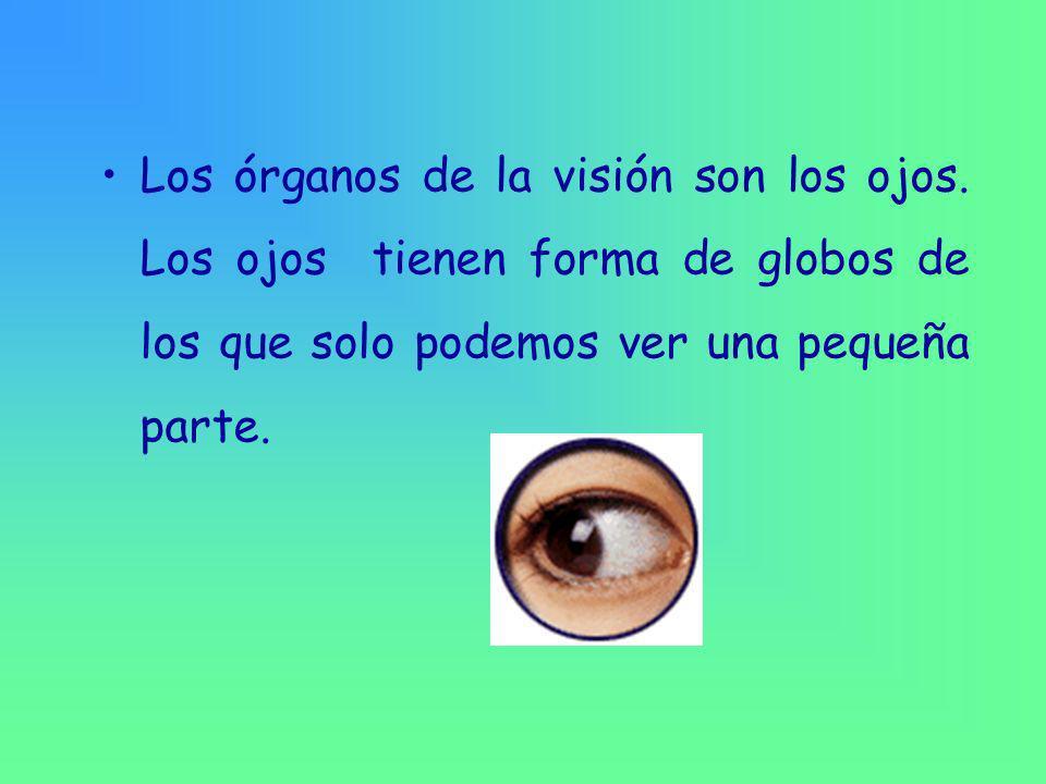 Los órganos de la visión son los ojos.