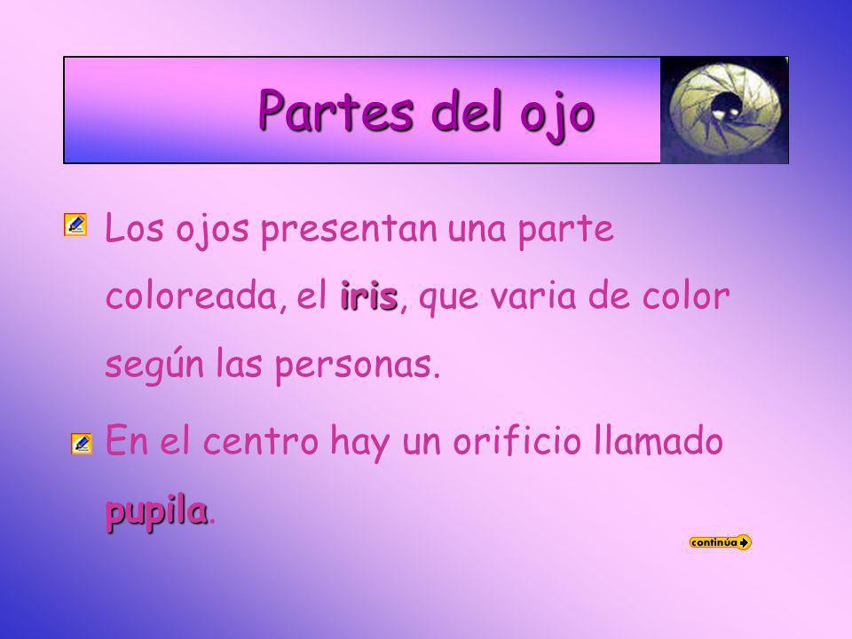 Partes del ojo irisLos ojos presentan una parte coloreada, el iris, que varia de color según las personas.