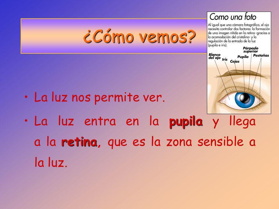 cristalinoDetrás de la pupila está el cristalino, que es transparente. retinaLa retina es una membrana que recubre le ojo internamente.