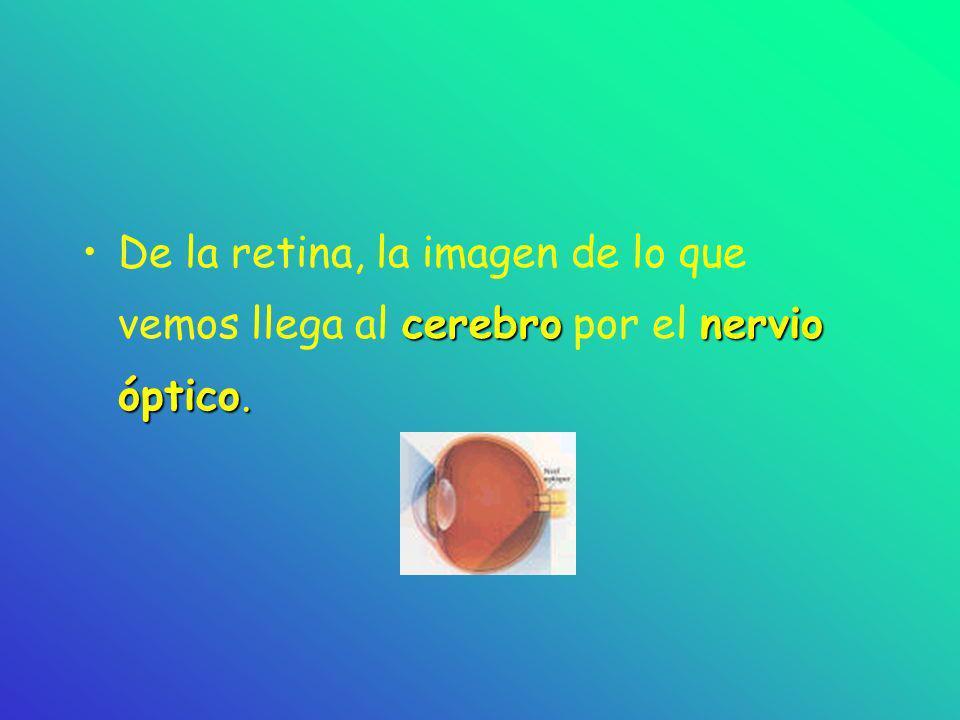 ¿Cómo vemos? La luz nos permite ver. pupila retinaLa luz entra en la pupila y llega a la retina, que es la zona sensible a la luz.