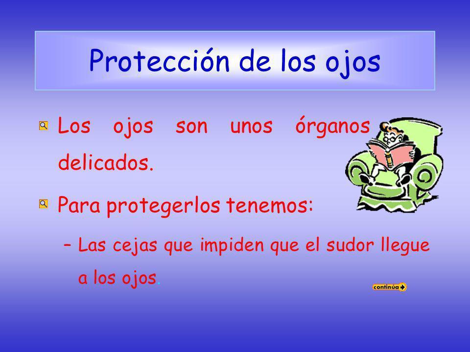 Protección de los ojos Los ojos son unos órganos muy delicados.