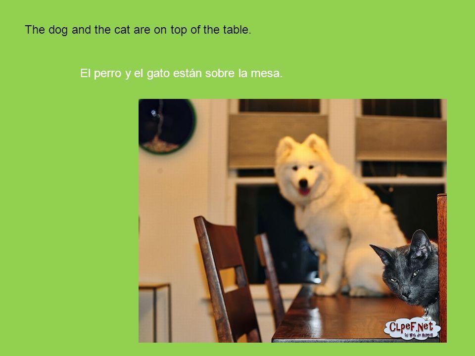 81 The dog and the cat are on top of the table. El perro y el gato están sobre la mesa.
