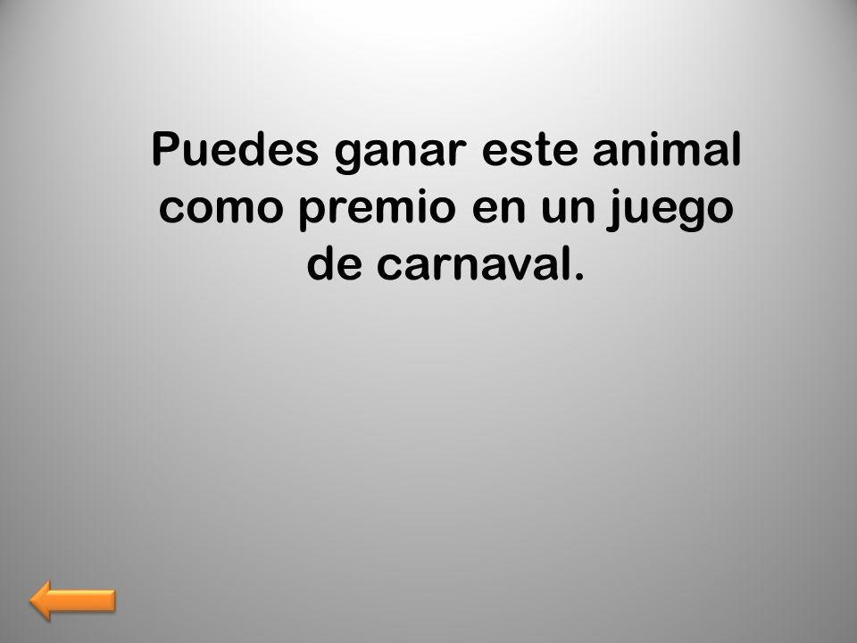 Puedes ganar este animal como premio en un juego de carnaval.