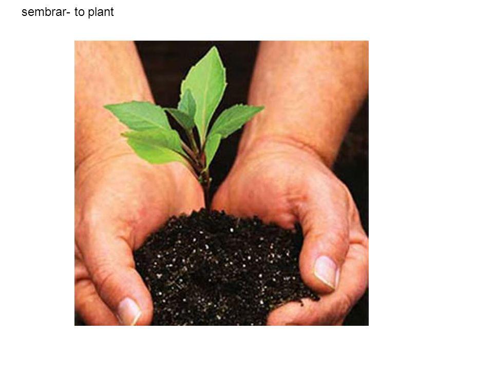 sembrar- to plant