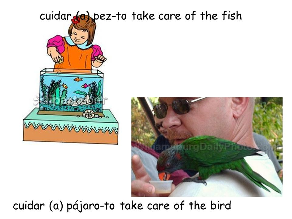 cuidar (a) pez-to take care of the fish cuidar (a) pájaro-to take care of the bird
