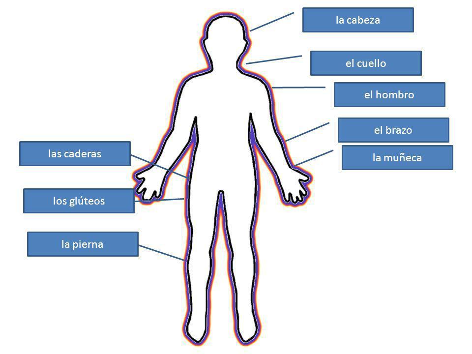 la cabeza el cuello el hombro el brazo la muñeca las caderas los glúteos la pierna