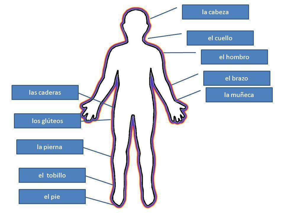 la cabeza el cuello el hombro el brazo la muñeca las caderas los glúteos la pierna el tobillo el pie
