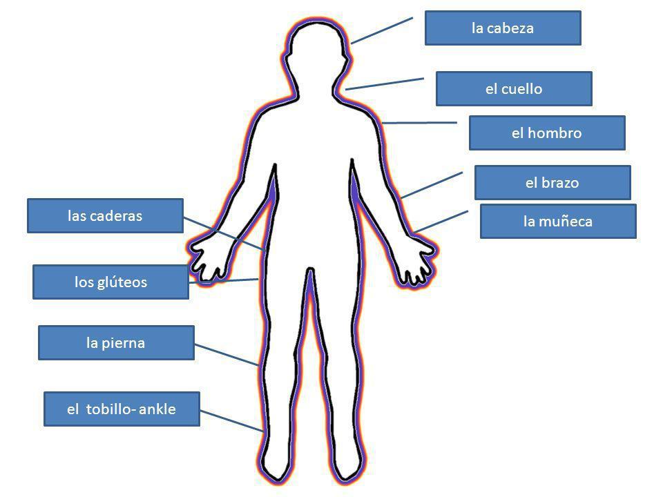 la cabeza el cuello el hombro el brazo la muñeca las caderas los glúteos la pierna el tobillo- ankle