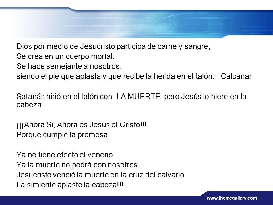 www.themegallery.com Dios por medio de Jesucristo participa de carne y sangre, Se crea en un cuerpo mortal. Se hace semejante a nosotros. siendo el pi