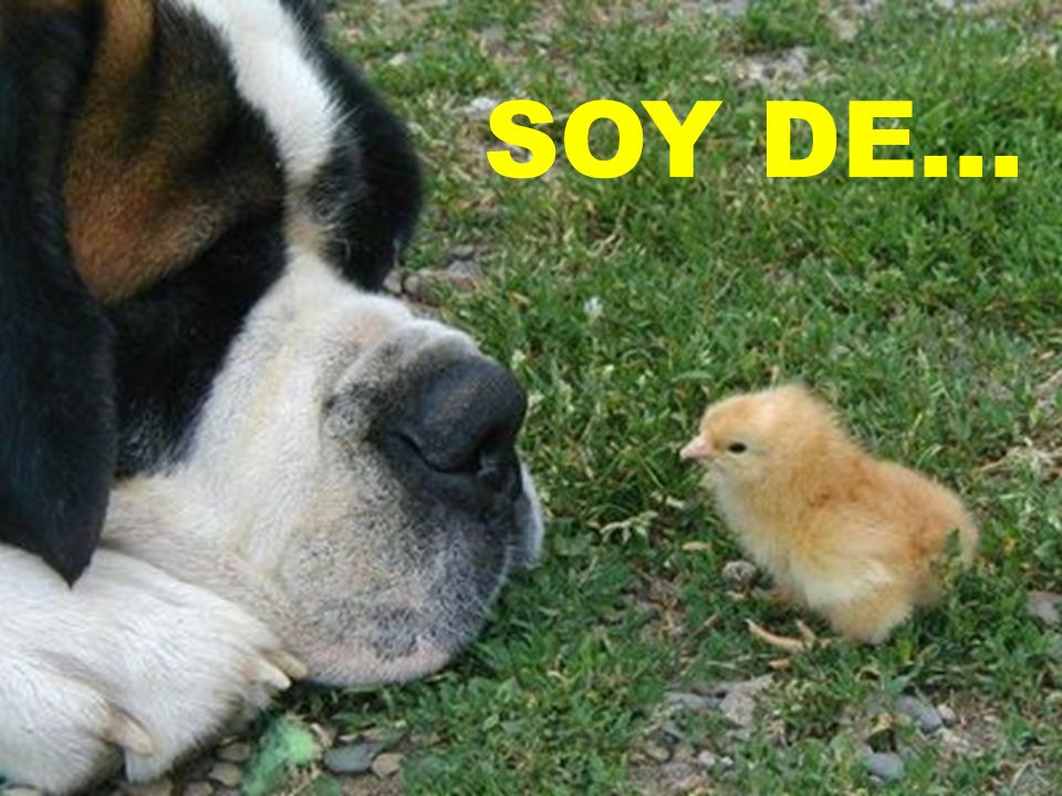 SOY DE...