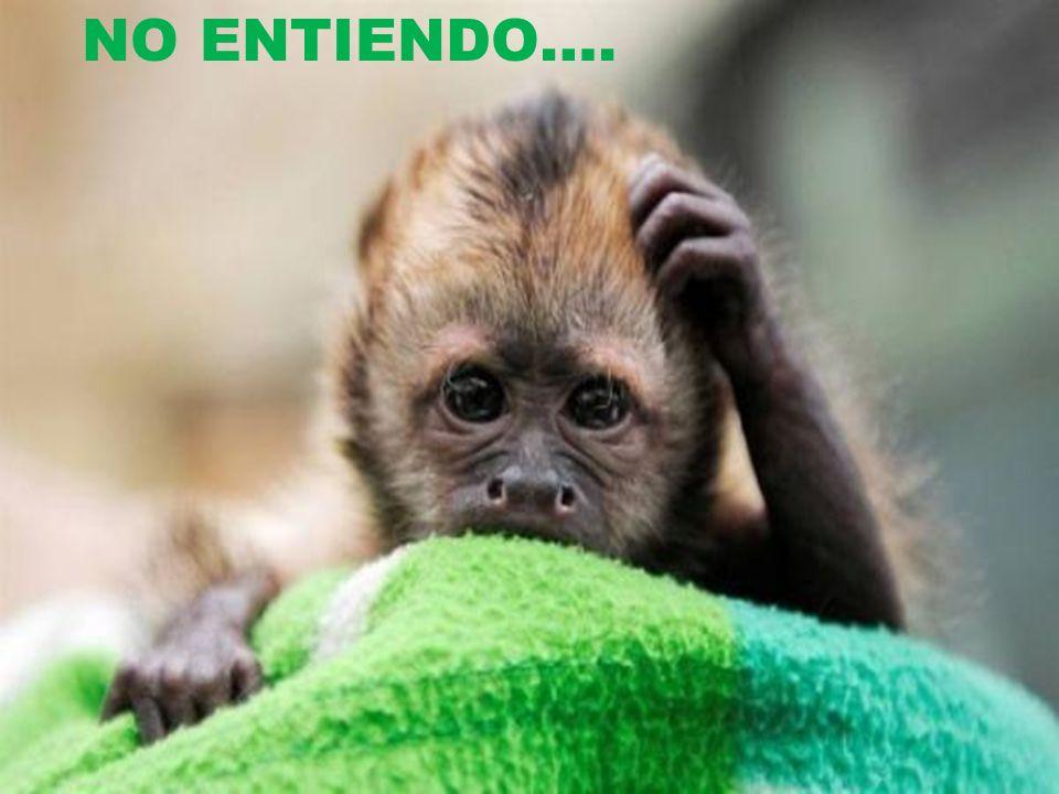 NO ENTIENDO….