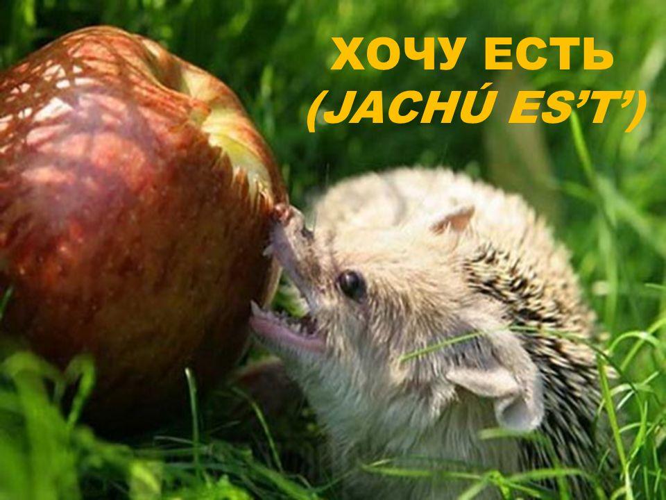 ХОЧУ ЕСТЬ (JACHÚ EST)