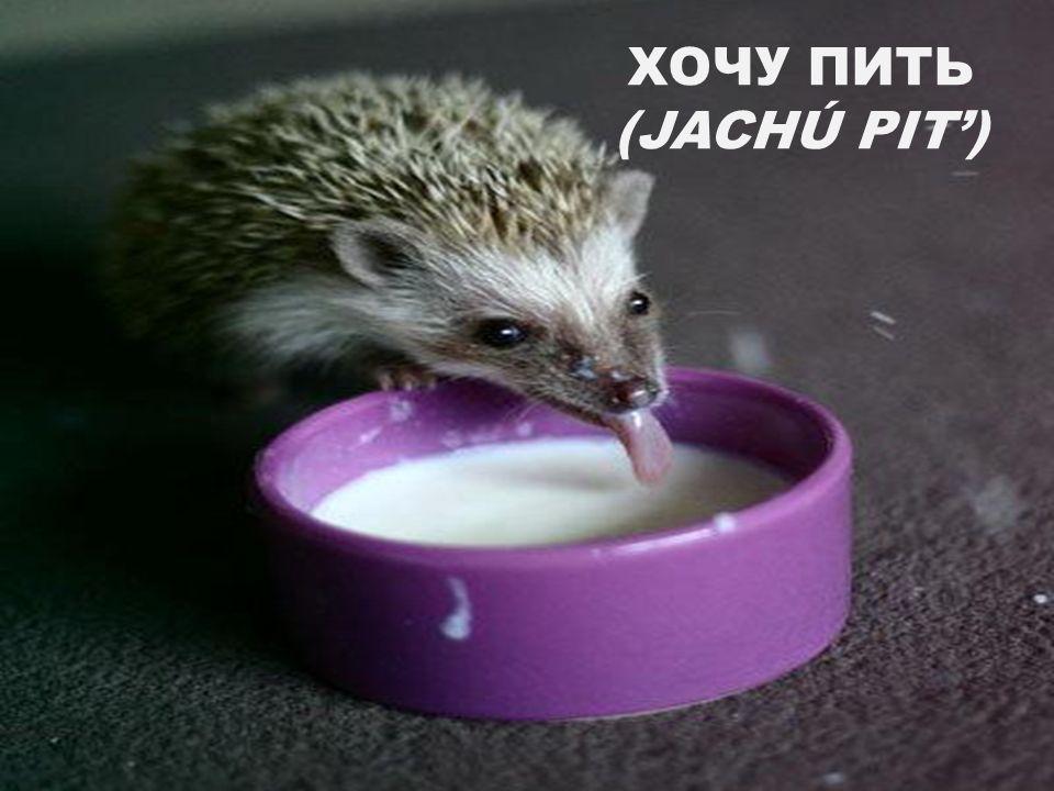 ХОЧУ ПИТЬ (JACHÚ PIT)