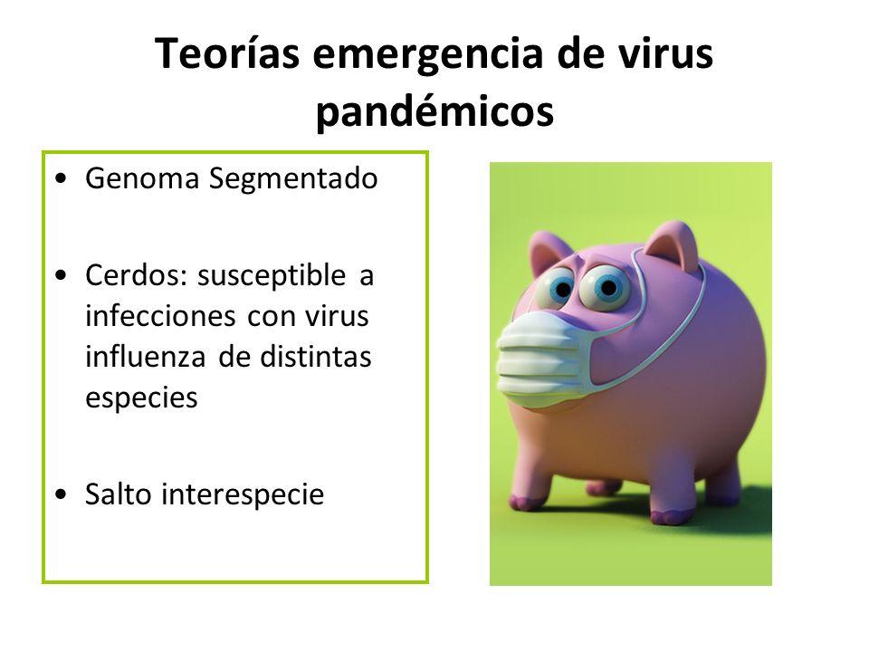 Teorías emergencia de virus pandémicos Genoma Segmentado Cerdos: susceptible a infecciones con virus influenza de distintas especies Salto interespeci