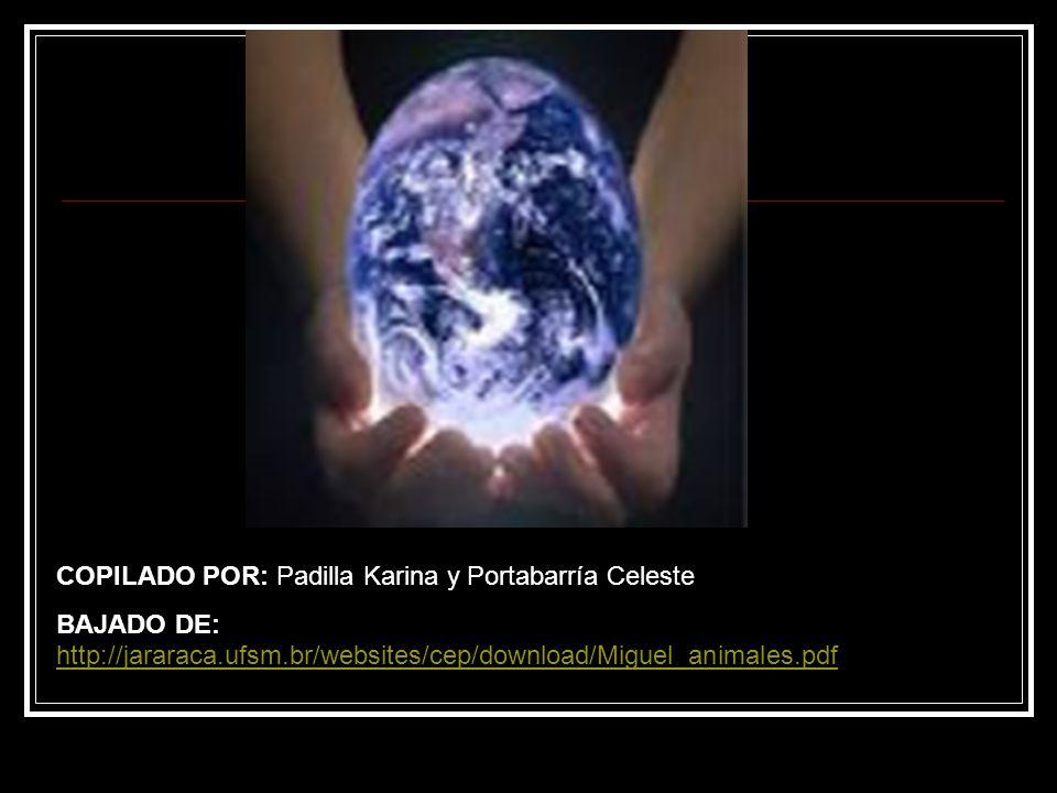 COPILADO POR: Padilla Karina y Portabarría Celeste BAJADO DE: http://jararaca.ufsm.br/websites/cep/download/Miguel_animales.pdf http://jararaca.ufsm.b