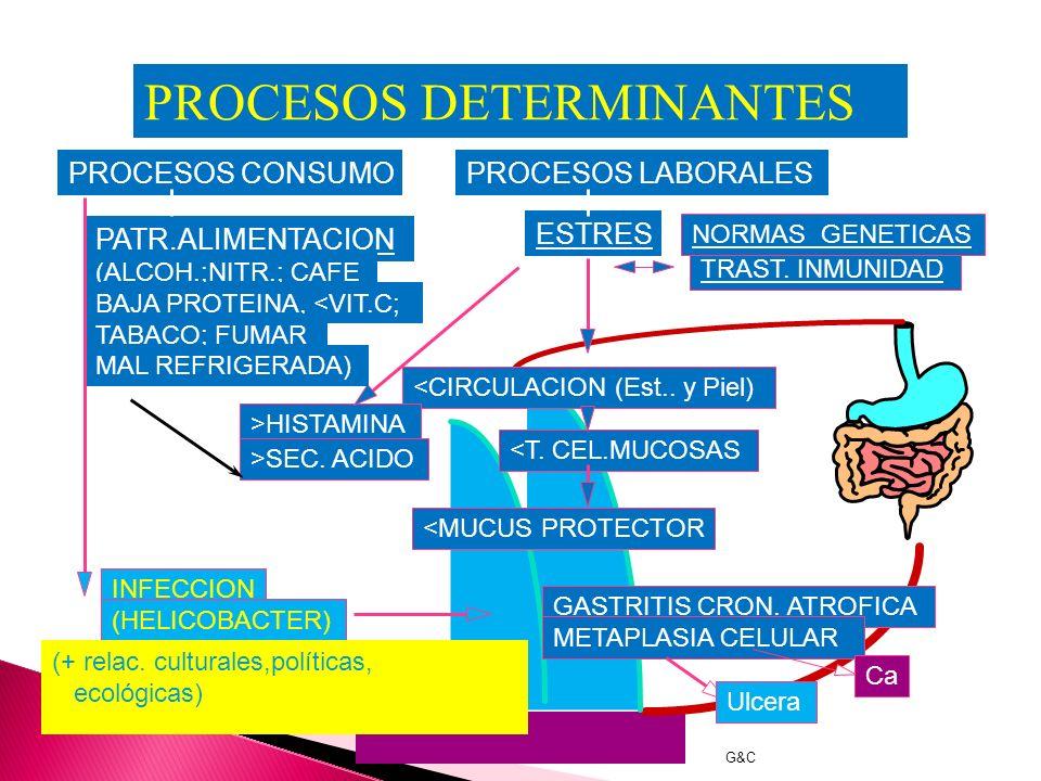 INTERPRETACION BIOLOGICISTA de la CAUSA de la GASTRITIS y ULCERA GASTRICA (HELICOBACTER PYLORI) AGENTE HUESPED G&C