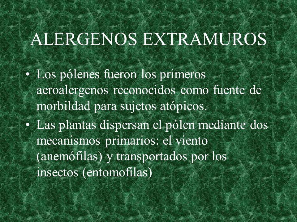 ALERGENOS EXTRAMUROS Los pólenes fueron los primeros aeroalergenos reconocidos como fuente de morbildad para sujetos atópicos. Las plantas dispersan e