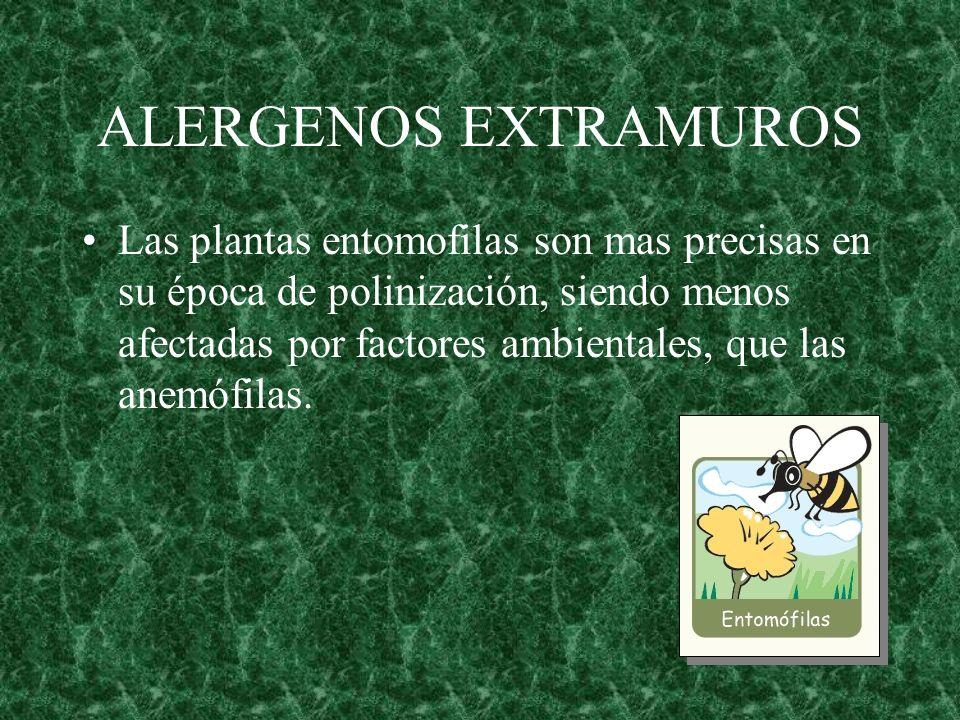 ALERGENOS EXTRAMUROS Las plantas entomofilas son mas precisas en su época de polinización, siendo menos afectadas por factores ambientales, que las an
