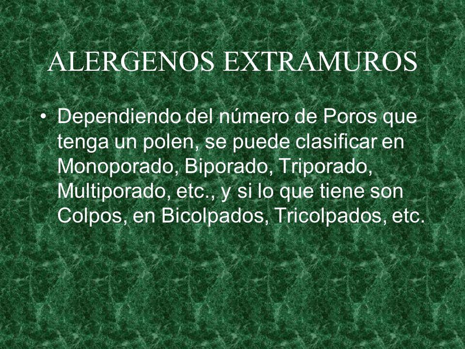 ALERGENOS EXTRAMUROS Dependiendo del número de Poros que tenga un polen, se puede clasificar en Monoporado, Biporado, Triporado, Multiporado, etc., y