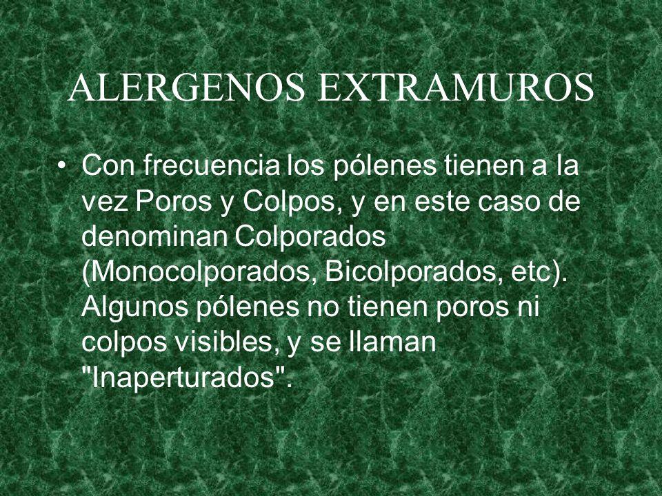 ALERGENOS EXTRAMUROS Con frecuencia los pólenes tienen a la vez Poros y Colpos, y en este caso de denominan Colporados (Monocolporados, Bicolporados,