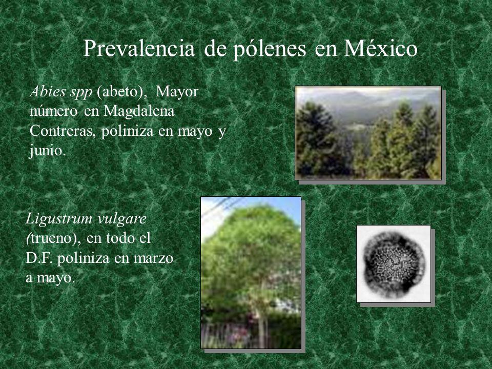 Prevalencia de pólenes en México Abies spp (abeto), Mayor número en Magdalena Contreras, poliniza en mayo y junio. Ligustrum vulgare (trueno), en todo