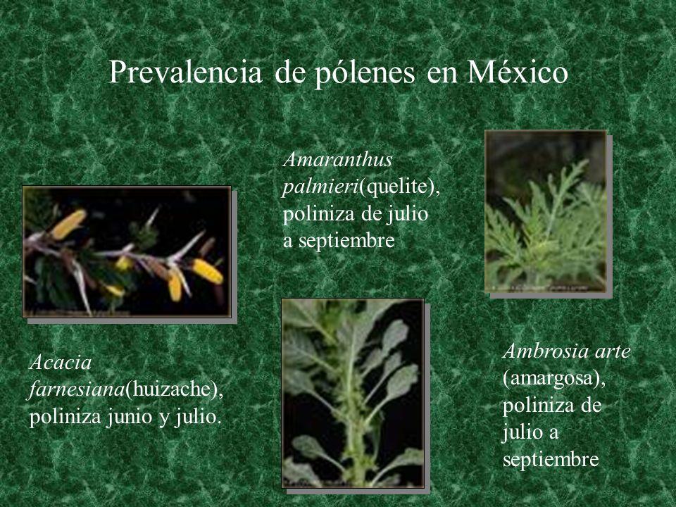 Prevalencia de pólenes en México Acacia farnesiana(huizache), poliniza junio y julio. Amaranthus palmieri(quelite), poliniza de julio a septiembre Amb
