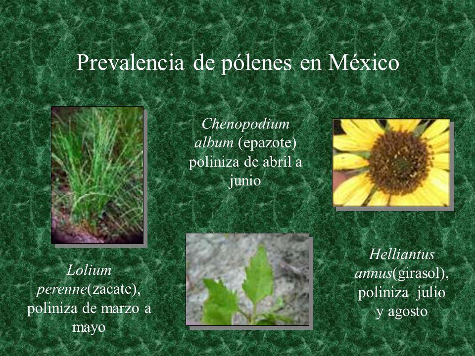 Prevalencia de pólenes en México Lolium perenne(zacate), poliniza de marzo a mayo Chenopodium album (epazote) poliniza de abril a junio Helliantus ann