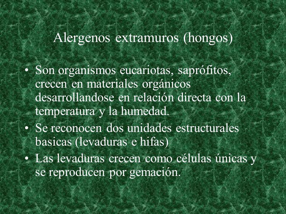 Alergenos extramuros (hongos) Son organismos eucariotas, saprófitos, crecen en materiales orgánicos desarrollandose en relación directa con la tempera