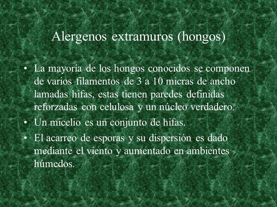 Alergenos extramuros (hongos) La mayoría de los hongos conocidos se componen de varios filamentos de 3 a 10 micras de ancho lamadas hifas, estas tiene