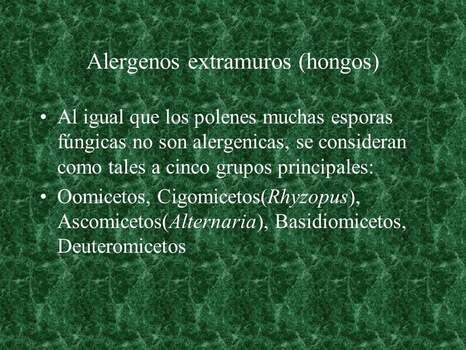 Alergenos extramuros (hongos) Al igual que los polenes muchas esporas fúngicas no son alergenicas, se consideran como tales a cinco grupos principales
