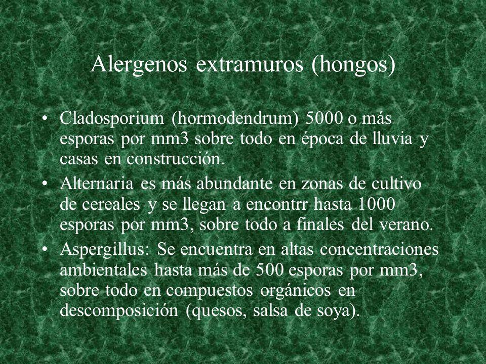 Alergenos extramuros (hongos) Cladosporium (hormodendrum) 5000 o más esporas por mm3 sobre todo en época de lluvia y casas en construcción. Alternaria