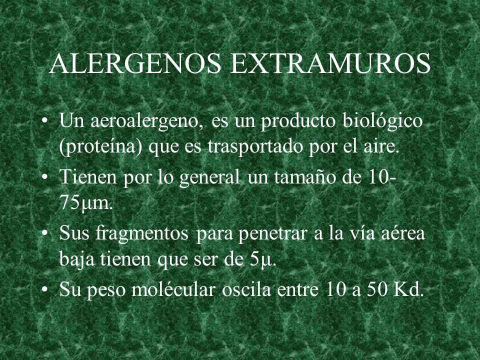ALERGENOS EXTRAMUROS Un aeroalergeno, es un producto biológico (proteína) que es trasportado por el aire. Tienen por lo general un tamaño de 10- 75μm.