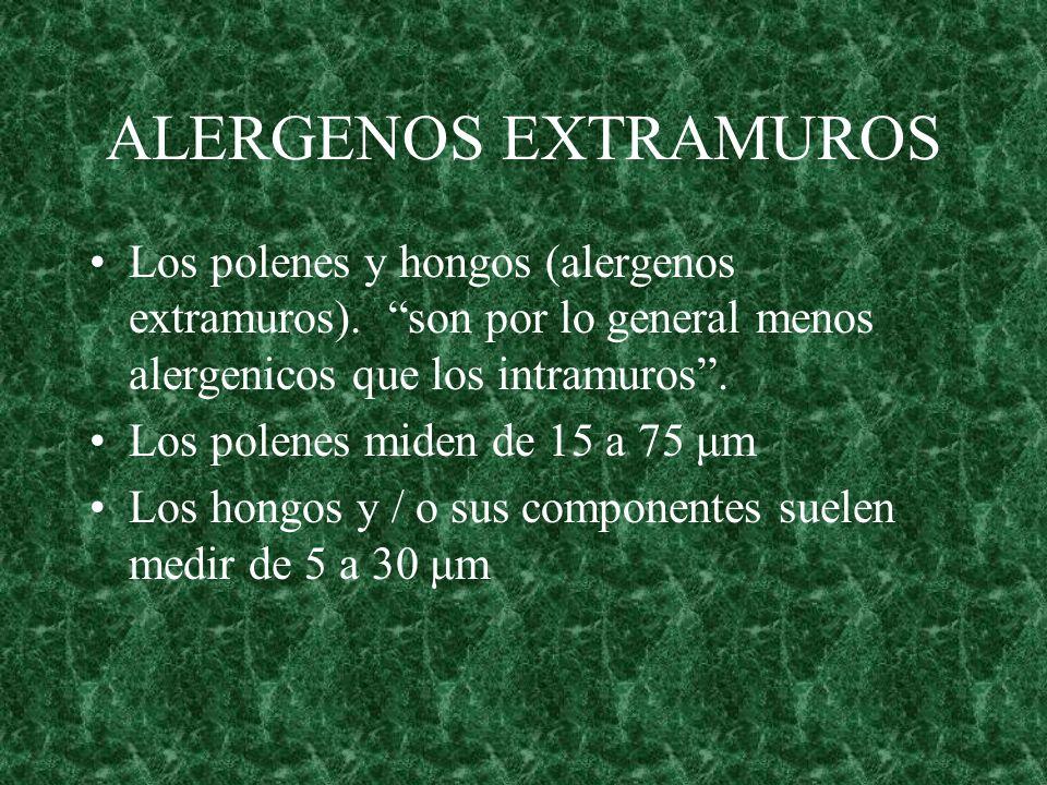 ALERGENOS EXTRAMUROS Los polenes y hongos (alergenos extramuros). son por lo general menos alergenicos que los intramuros. Los polenes miden de 15 a 7