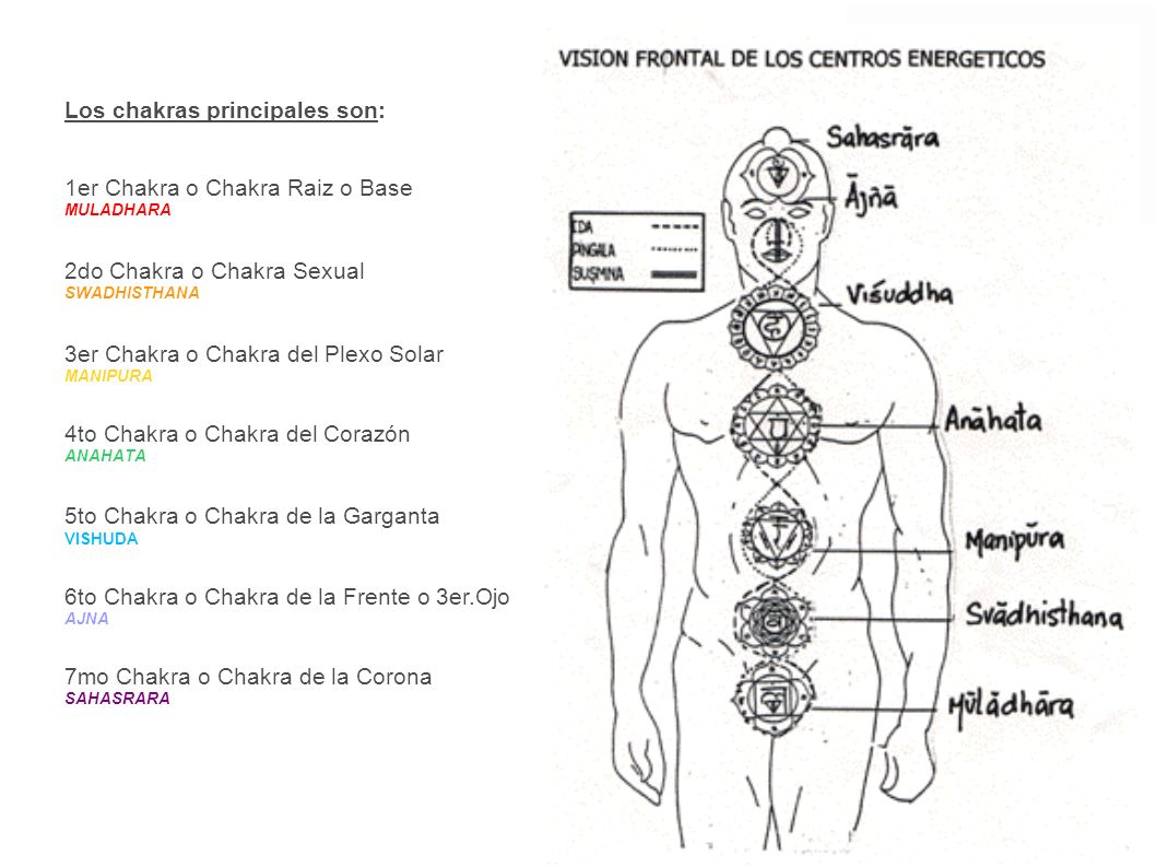Los chakras principales son: 1er Chakra o Chakra Raiz o Base MULADHARA 2do Chakra o Chakra Sexual SWADHISTHANA 3er Chakra o Chakra del Plexo Solar MAN
