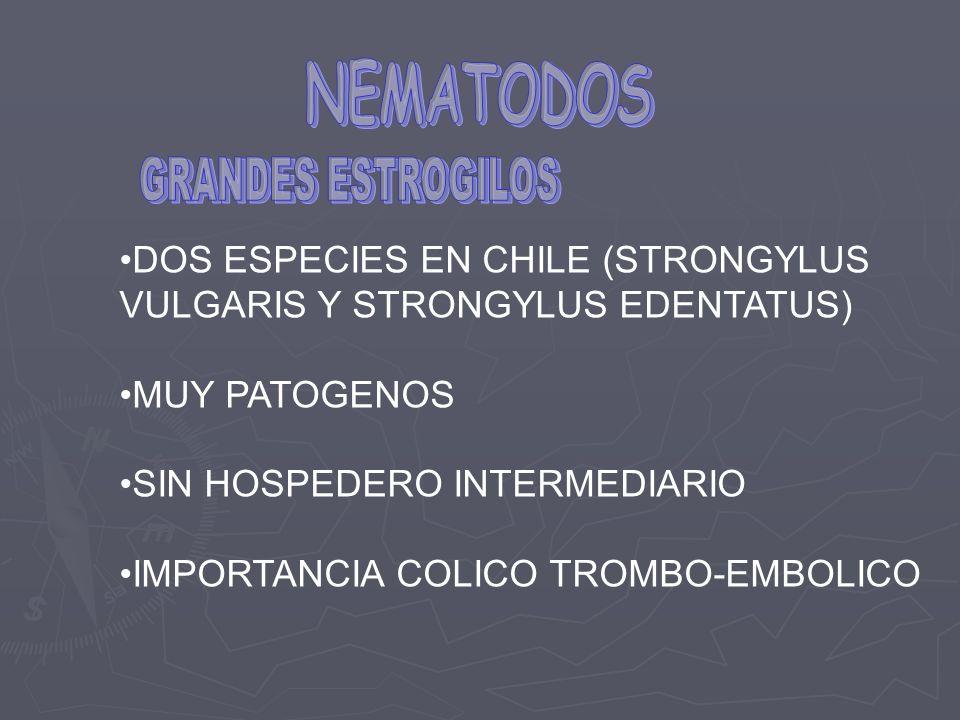 DOS ESPECIES EN CHILE (STRONGYLUS VULGARIS Y STRONGYLUS EDENTATUS) MUY PATOGENOS SIN HOSPEDERO INTERMEDIARIO IMPORTANCIA COLICO TROMBO-EMBOLICO