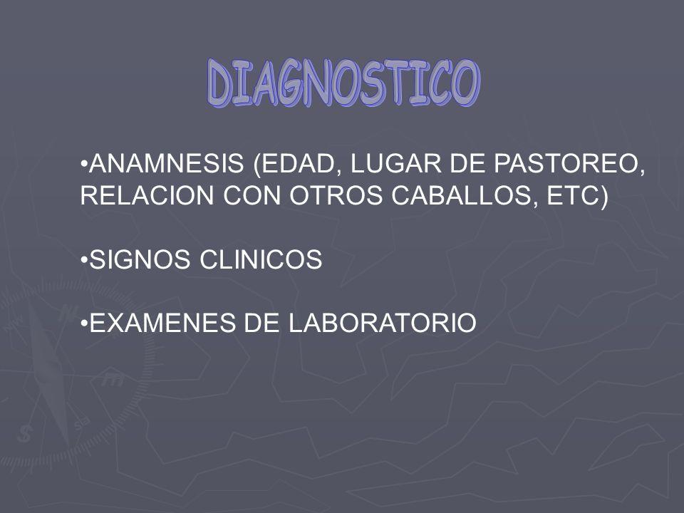 ANAMNESIS (EDAD, LUGAR DE PASTOREO, RELACION CON OTROS CABALLOS, ETC) SIGNOS CLINICOS EXAMENES DE LABORATORIO