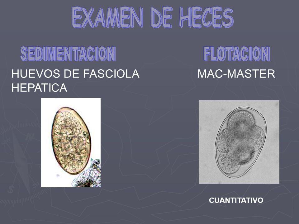 HUEVOS DE FASCIOLA HEPATICA MAC-MASTER CUANTITATIVO