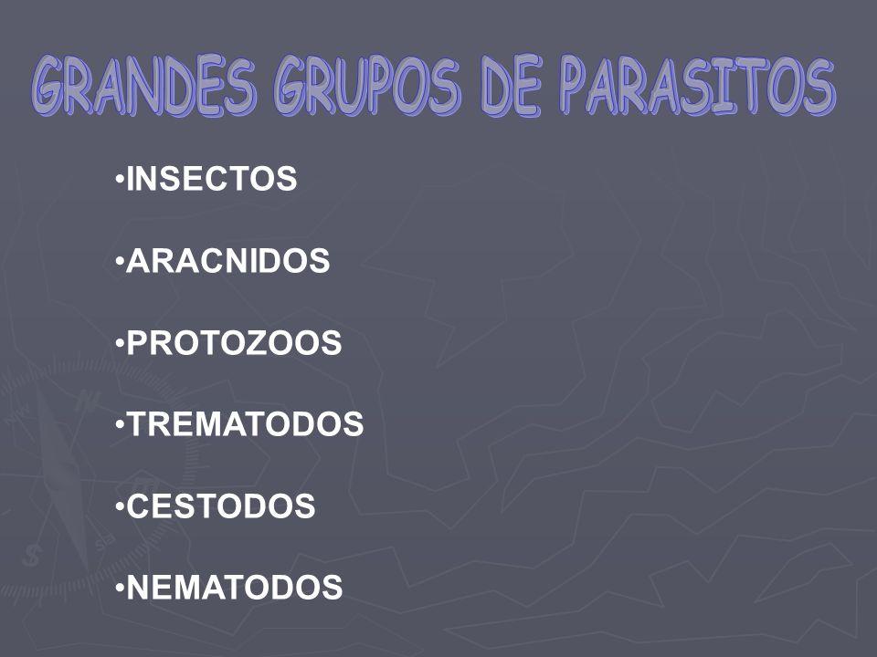 INSECTOS ARACNIDOS PROTOZOOS TREMATODOS CESTODOS NEMATODOS