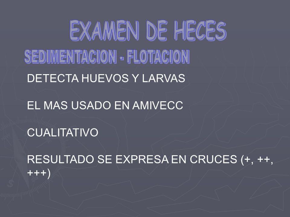 DETECTA HUEVOS Y LARVAS EL MAS USADO EN AMIVECC CUALITATIVO RESULTADO SE EXPRESA EN CRUCES (+, ++, +++)