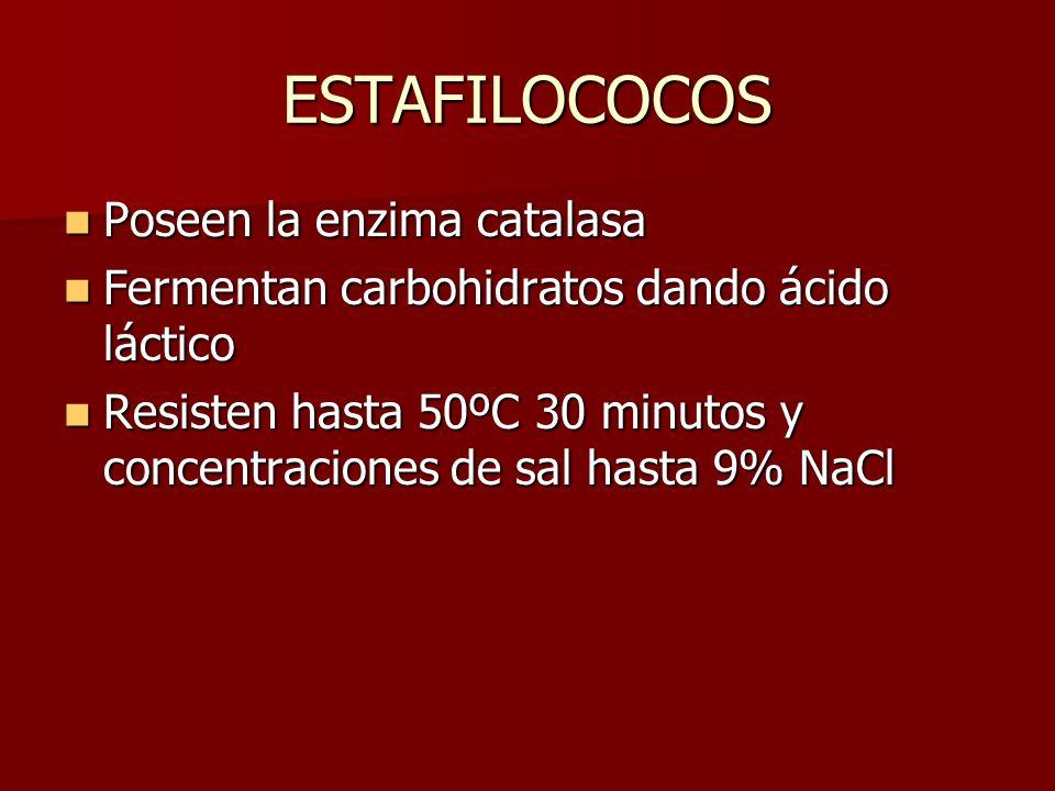 ESTAFILOCOCOS Poseen la enzima catalasa Poseen la enzima catalasa Fermentan carbohidratos dando ácido láctico Fermentan carbohidratos dando ácido láct