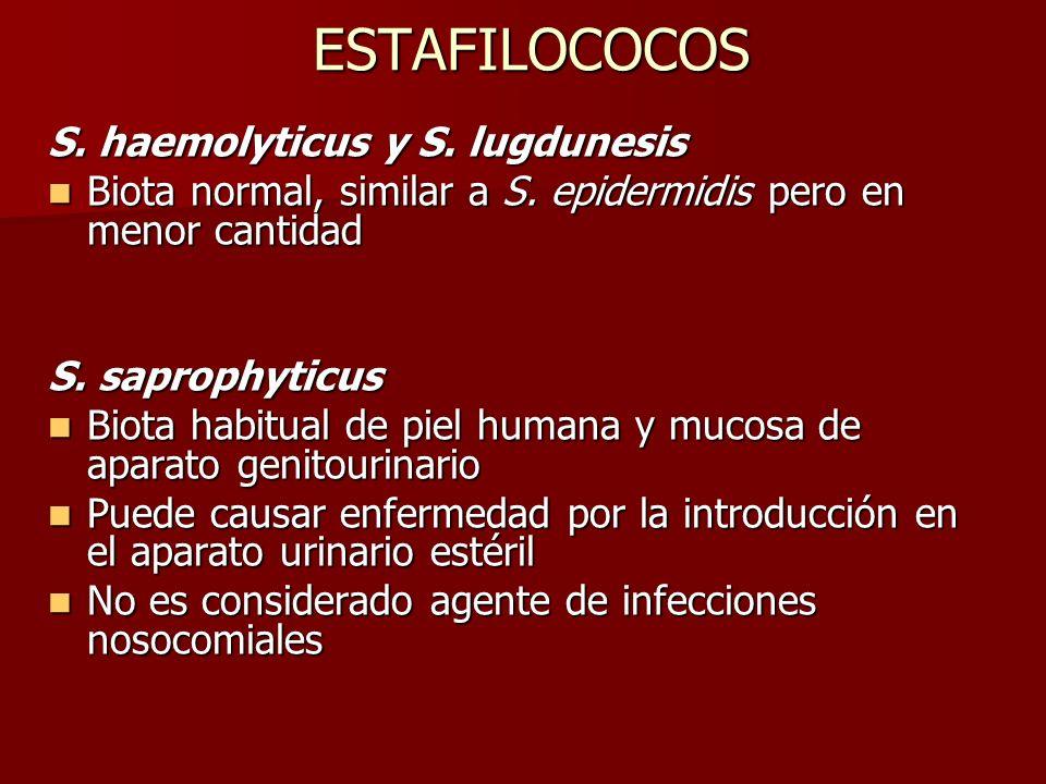 ESTAFILOCOCOS S. haemolyticus y S. lugdunesis Biota normal, similar a S. epidermidis pero en menor cantidad Biota normal, similar a S. epidermidis per