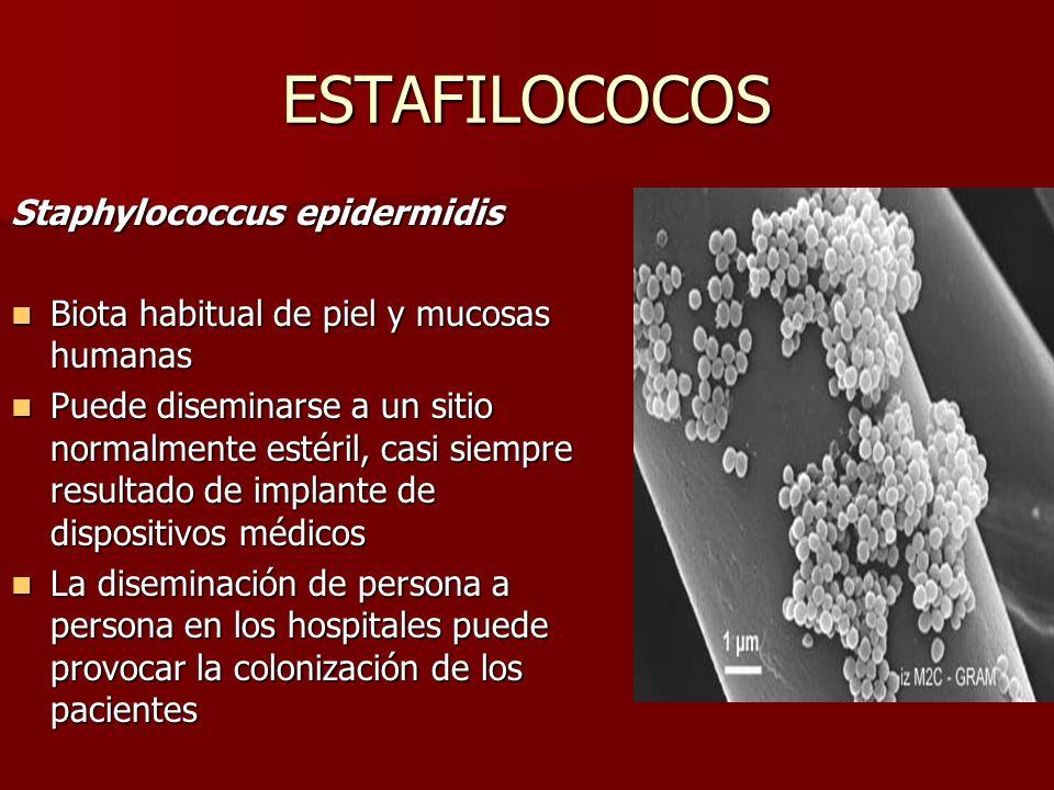 ESTAFILOCOCOS Staphylococcus epidermidis Biota habitual de piel y mucosas humanas Biota habitual de piel y mucosas humanas Puede diseminarse a un siti