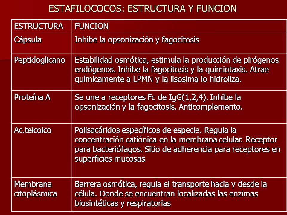 ESTAFILOCOCOS: ESTRUCTURA Y FUNCION ESTRUCTURAFUNCION Cápsula Inhibe la opsonización y fagocitosis Peptidoglicano Estabilidad osmótica, estimula la pr